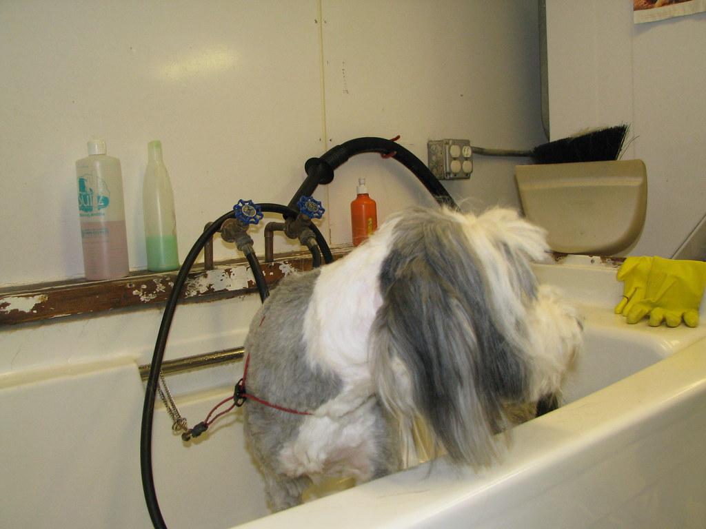 Dog Grooming Jobs Wilmington Nc