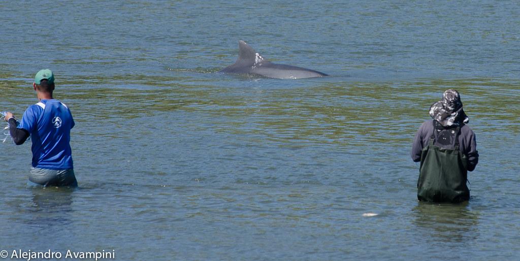 Pescdores atentos a los delfines