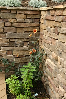 Stone wall and flower | by Revolutionary Gardens