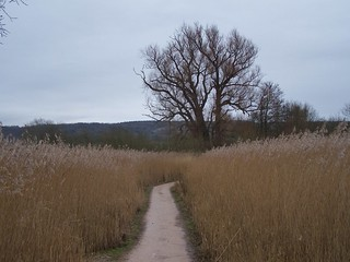 Winter at RSPB Leighton Moss, Lancashire, England - February 2010 | by SaffyH