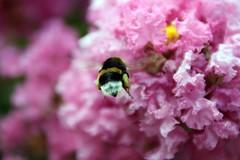 Nice Butt Mr(s). bumble bee by Mamooli
