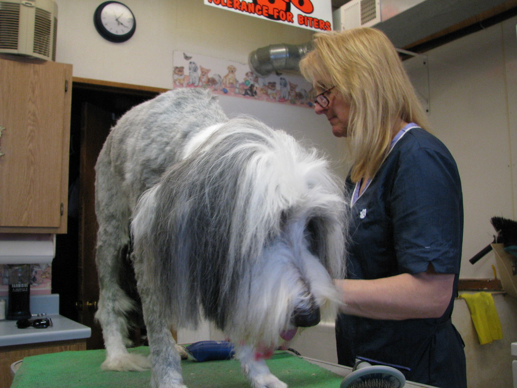 Dog Grooming Mobile Service Canberra
