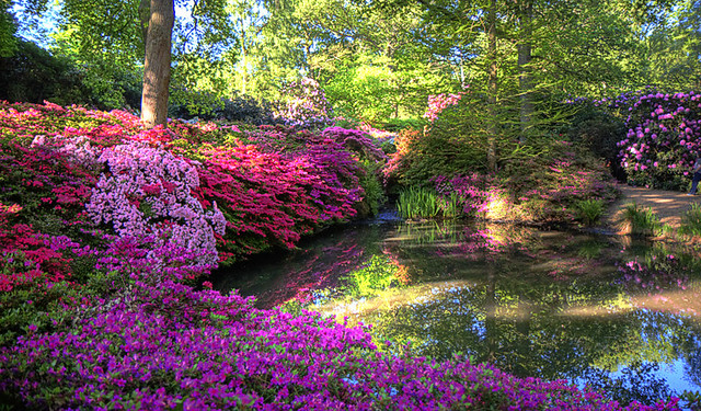 Isabella Plantation Richmond Park The Isabella