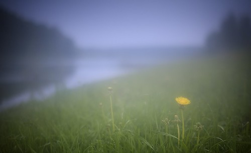 morning macro landscape with dandelions near the river in a fog | by czdistagon.com