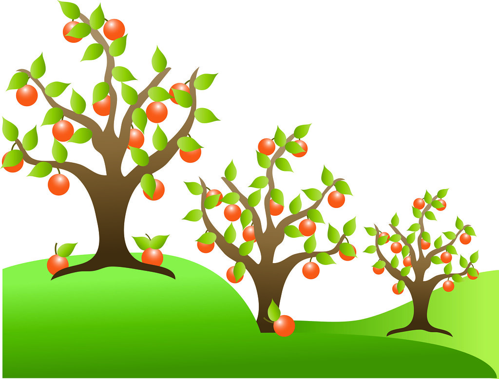 free fruit tree clipart - photo #4