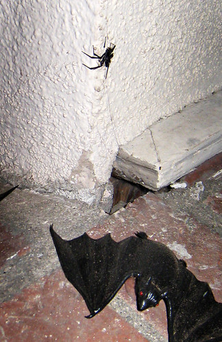 dead black widow spider+fake bat | by ...love Maegan