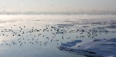 Flocking by Antti Tassberg