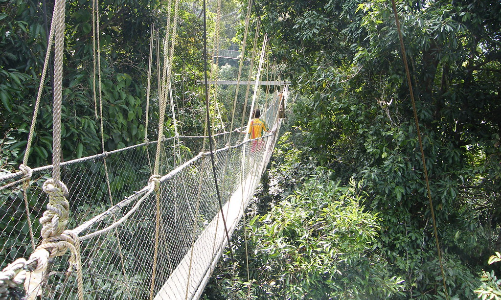 Taman Negara Canopy Walkway in Malysia