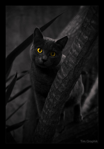 TheCats[3] | by Tim.D Photography