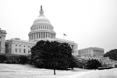 20100130C_Capitol07 | by Troy Thomas