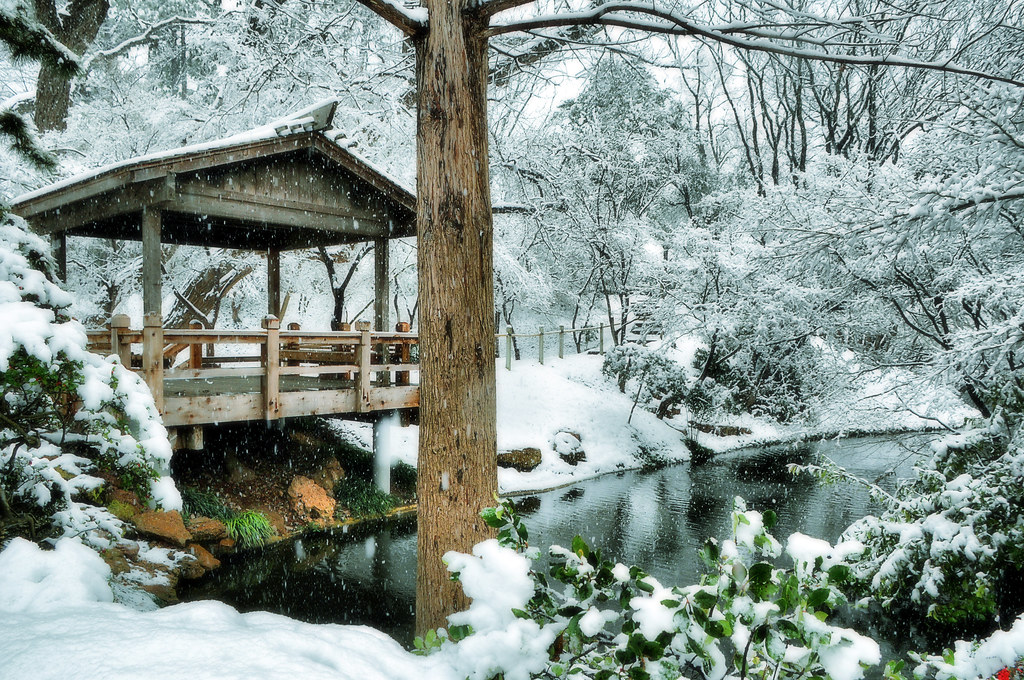 ... Snow Japanese Garden Fort Worth Texas Snowfall Winter Storm Pond Koi  Lake Trees Flakes Tea House