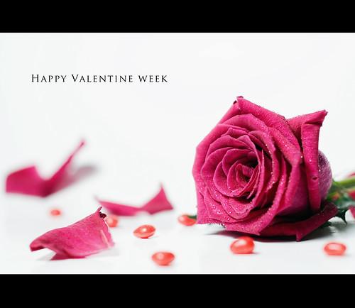 552 Happy Valentine Week Explore Highest Position