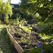The main garden bed