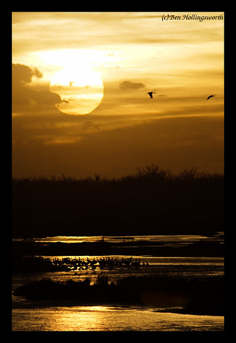Sandhill Cranes at Sunset 4 | by Obi-Wan-YJ
