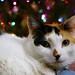 Christmas Chloe