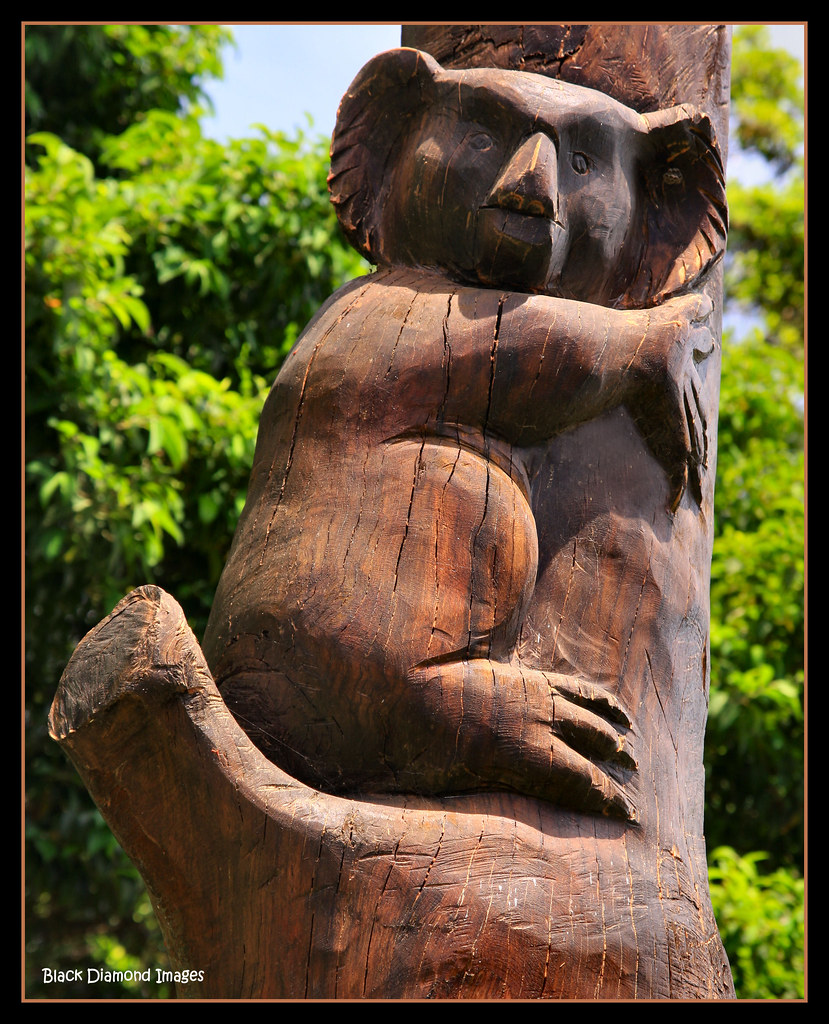 Koala totem chain saw carved by terry everingham black
