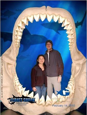 Megalodon Shark jaws w/ teeth | Planet Shark exhibition Geor… | Flickr