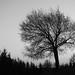 tree (140)