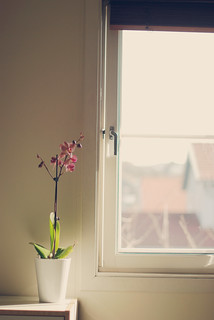 window light | by e.kristina