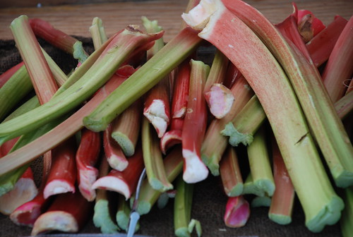 rhubarb from Wilklow Orchards | by kthread