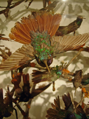 Hummingbird Display Natural History Museum