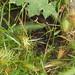 rattlesnake by brian murphy
