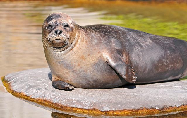 Seal on an island