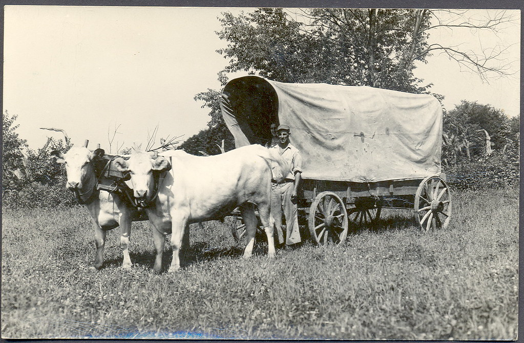 Oxen pulling covered wagon in parade on Georgia Street west of ...