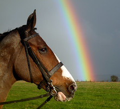 Horse and a Rainbow by Will Tattersall