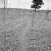 Solitary tree in black and white at the end of dirt path