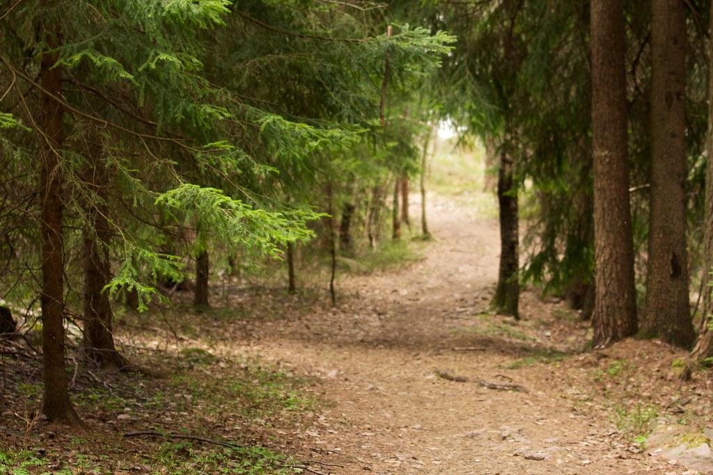 Forest Scene Remi Longva Flickr