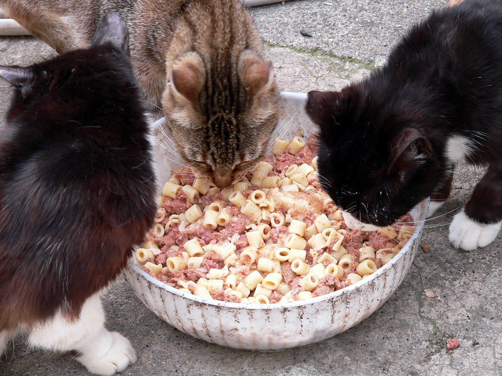 Cooked Cat Food And Smell Of Feces
