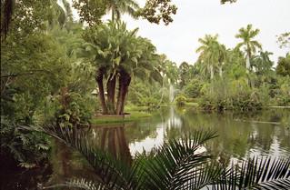 Sarasota Jungle Gardens Sarasota Jungle Gardens Flickr