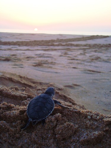 Turtle Dawn | by BetterLifeCycle