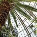 Photo-A-Day #360: Indoor Palm