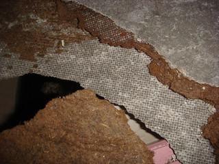 Asbestos Cement Clad Shielding Damage Damaged Cabinet