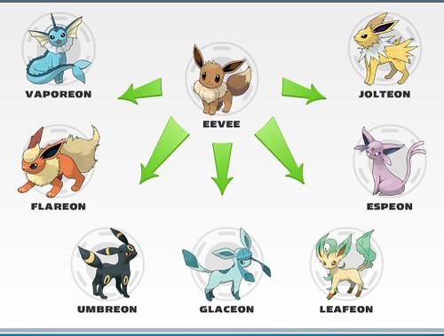 Eevee Evolution Chart Rose93bloom Flickr