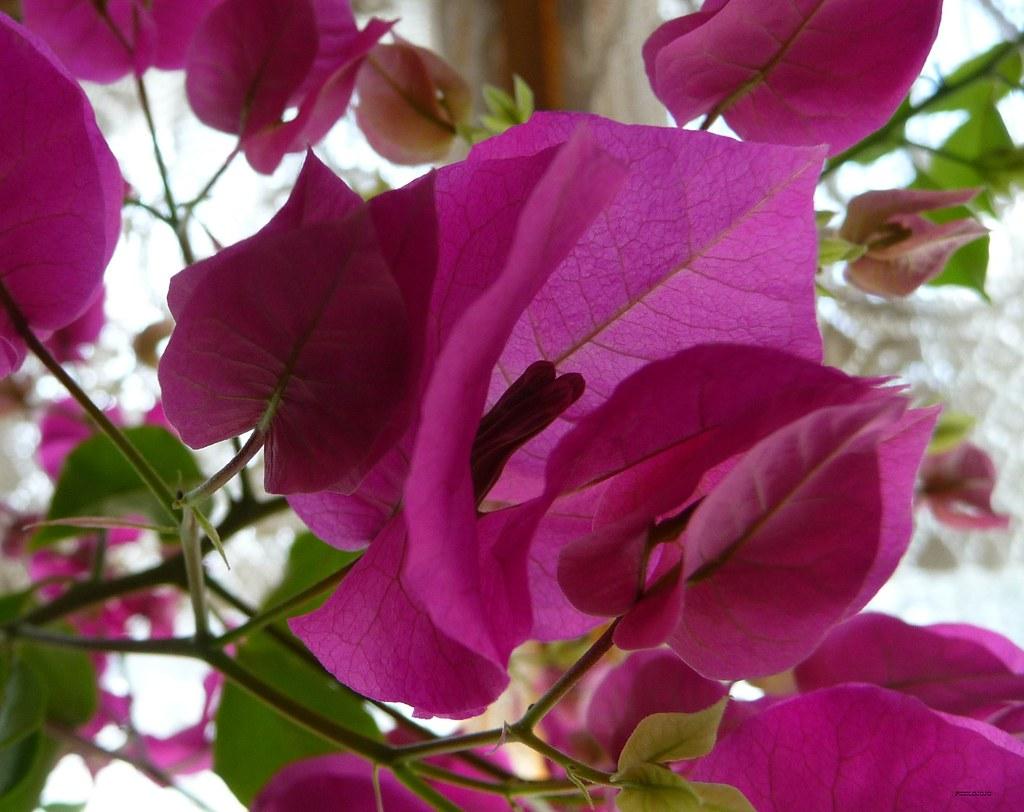 Lovely Pink Flowers Merci Pour Vos Chaleureux Comme Flickr
