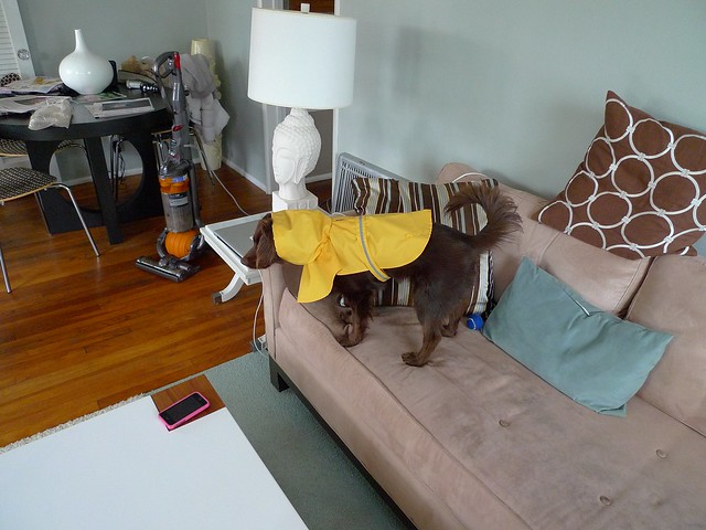Jonathan Adler Dog Collar Small