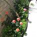 backyard garden planter -before-1
