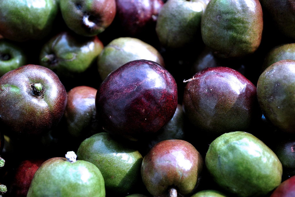 plum spanish girl personals Plump - translation to spanish, pronunciation, and forum discussions.
