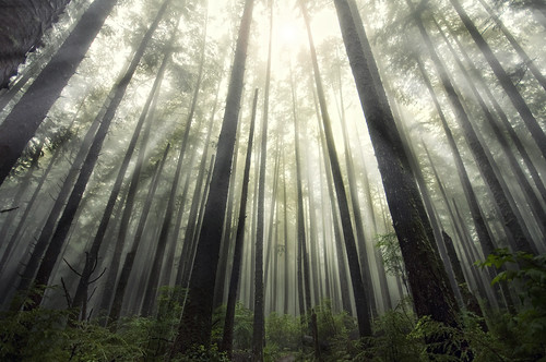 La Push Forest | by Lee Sie