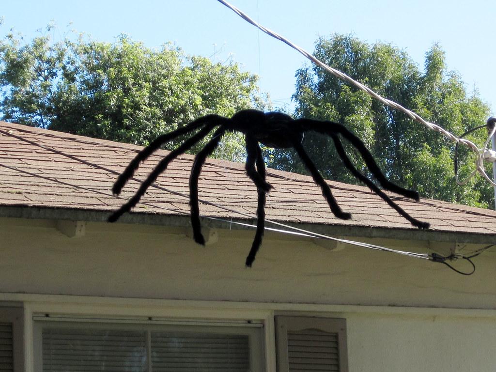 Giant Spider Halloween Decoration Photo Album | typat.com