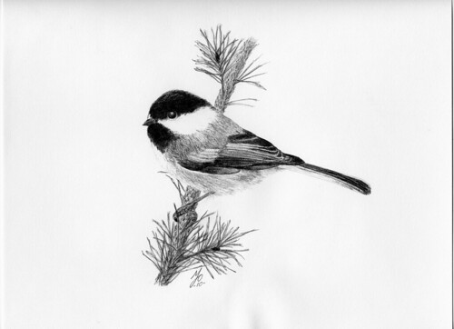 Chickadee Drawing Hot Off The Drawing Board Mike Flickr