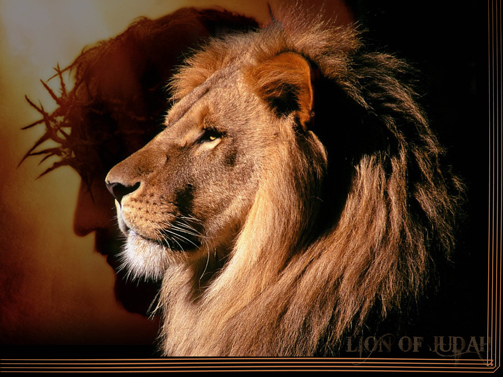 Lion of Judah | Bulma ...