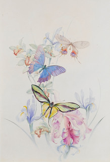 "Edward Julius Detmold (1883-1957),""Three large butterflies on irises and lilies"" 