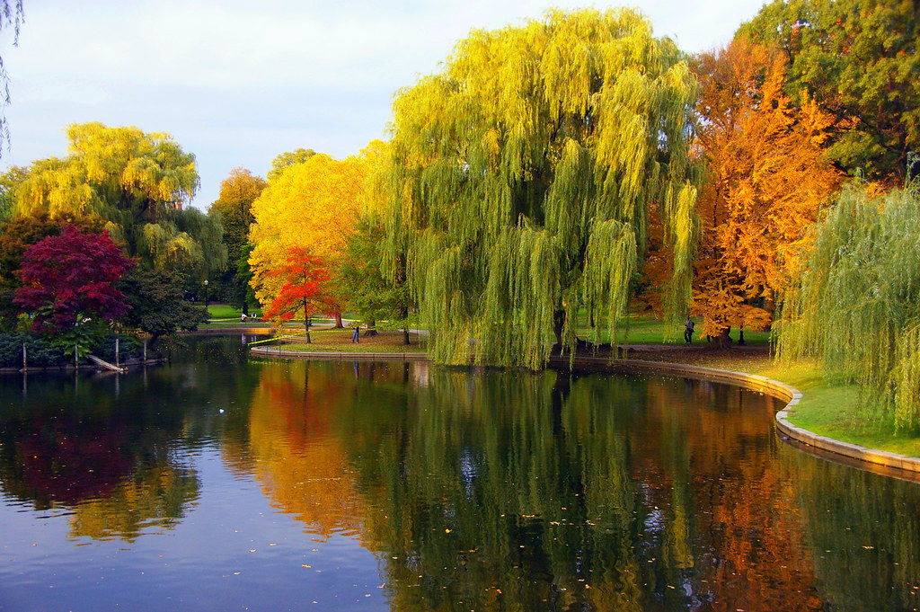 Imgp18841 boston common foliage the boston public garden i flickr Boston public garden map