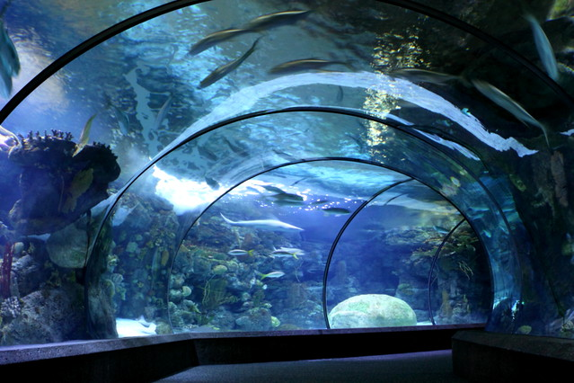 Aquarium Tunnel Omaha Henry Doorly Zoo Aquarium Ms0924