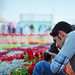 @ Flower festival  in Riyadh