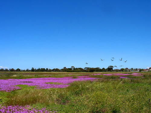 Pigface & Flying Birds | by Linda & Anthony Ang